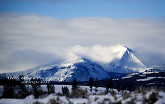christmas001 (Deby Dixon) Tags: travel nature landscape photography nationalpark wolf wildlife moose fox yellowstonenationalpark wyoming bison wyo bullelk debydixonphotography