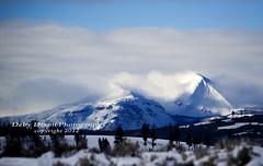 christmas001 (Deby Dixon) Tags: travel nature landscape photography nationalpark wolf wildlife moose fox yellowstonenationalpark wyoming bison wyo bullelk debydixonphotography