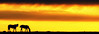 Muita luz, amigos, em 2013... (Eduardo Amorim) Tags: sunset brazil horses horse southamerica field brasil criollo caballo cheval atardecer caballos tramonto sonnenuntergang pôrdosol campo cavalos pelotas pferde cavalli cavallo cavalo pferd riograndedosul pampa poniente champ anoitecer coucherdesoleil hest hevonen campanha brésil chevaux entardecer crepúsculo 馬 américadosul poente häst 말 amériquedusud лошадь 马 sudamérica suramérica américadelsur סוס südamerika crioulo caballoscriollos criollos حصان tropillas costadoce americadelsud tropilhas tropilla ม้า crioulos cavalocrioulo americameridionale caballocriollo auffangen eduardoamorim cavaloscrioulos ঘোড়া