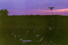 The Dandelion (Luke LaPila) Tags: camera flowers sunset flower slr art film field night garden fun photo haze minolta kodak dusk picture iso 400 dslr srt kodak400