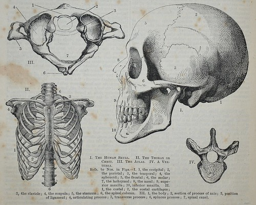 Human anatomy - Popular Educator 1862