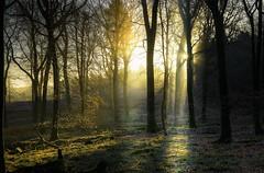 Magic forest (Eric Goncalves) Tags: morning mist colors forest sunrise magic dew array nikond7000 ericgoncalves rememberthatmomentlevel1