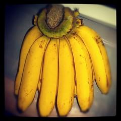มาลิงๆทั้งหลาย มสกินกล้วยกำแพงเพชรนิ...