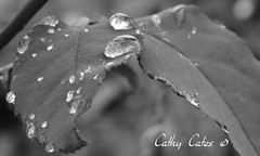 Beads (Cathy Cates (aka CrafteeCC)) Tags: droplets raindrops raindropsonroses nikond3100