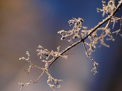 Cristaux de lumière **--* (Titole) Tags: blue white frost frosted givre shallowdof friendlychallenges thechallengefactory titole favescontestfavored nicolefaton