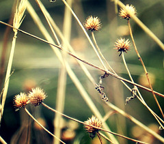 Dancers/Lovers/Singers (Venusian Lady) Tags: nature beautiful field landscape weeds woods focus dof bokeh softtones