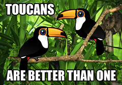 Toucans Are Better Than One (birdorable) Tags: cute bird toucan funny tocotoucan birdorable