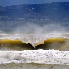 SEA + RUBY