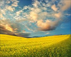 Spring light (Katarina 2353) Tags: landscape spring katarina2353 katarinastefanovic nikon film