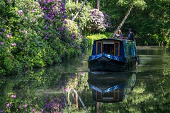 Reflective summer holiday (fotosforfun2) Tags: canon canon650d canonefs55250 basingstokecanal canal water waterway barge boat reflection summer seasons blue purple holiday cruise foliage green