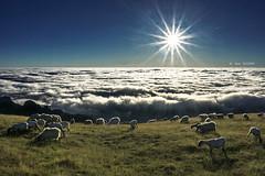 PAZ (Jabi Artaraz) Tags: jabiartaraz zb euskoflickr ovejas gorbea atxondo ardiak contraluz amanecer sunrise sunset sol soleil