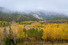 15-10-05_BeatenPath_-2 (Kayla Stevenson) Tags: fallcolour trees usa plants aspens mist bouldermountain yellow fog utah