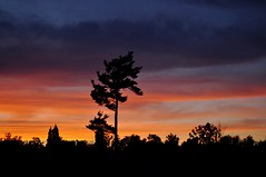 Au coucher du soleil (couleurs101) Tags: couleurs nature