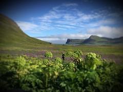 Hornvik Iceland (unnurol) Tags: iphotography hvönnhornbjargrock hornhornvikhornvíkicelandoutdoorlandscapegreenbluewildnaturenaturehiking