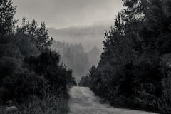 IMGP3123-Edit (jamin.sandler) Tags: pentaxistds promasterspectrum728210mmf4265 einkerem fog
