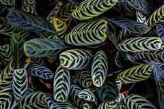 3D Leafy (Martin Snicer Photography) Tags: nature leaves color colours patterns 6d 50mm canon fullframe