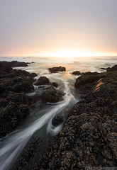 Oregon Light (Erik Johnson Photography) Tags: green cape perpetua oregon coast sea ocean seascape landscape leading line water sunset glow goldenhour clouds mood moody pacific northwest pnw rock shell photo breathtaking nature scenery