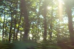 Midsummer Reverie (Sugar Crisp) Tags: contax aria 35mm film analogue 2016 august summer reverie sunlight woods