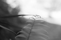 Plant shapes (artseejodee) Tags: garden naturallight 50mm monochrome monochromemonday black white abstract outdoors shape canon summer september depthoffield bokeh zen peaceful tranquil nature bw gray grey soft plant palm potted green triangle