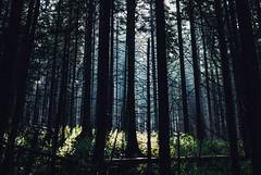 hide and seek (ewitsoe) Tags: forest woods memory ewitsoe nikond80 35mm landscape words zakopane poland europe trees lightmorninglight filteredlight grass summer dense