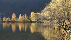 Am Zeller See in Prielau bei Thumersbach (sterreich) (2015-11-02 -02) (Cary Greisch) Tags: austria aut prielau salzburg thumersbach zellersee