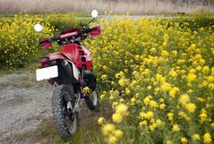 L1008446c (haru__q) Tags: leica m8 leitz summicron field mustard  honda crm250r motorcycle 2st