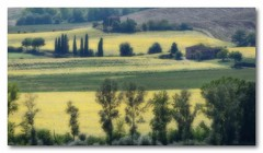 Toscane (jldum) Tags: toscane italie italia landscape landscapesdreams paysage nature sal70200g bordure tournesol greenscene worldwidelandscapes