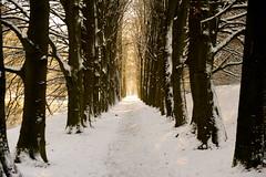 Winter in Arnhem (marcoderksen) Tags: park winter december sneeuw arnhem 2012 zypendaal