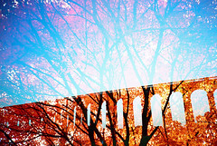 -viaduct sparks (Hodaka Yamamoto) Tags: uk bridge autumn tree fall silhouette japan maple lomography unitedkingdom doubleexposure double lomolca viaduct multipleexposure doubles eb