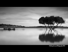 Bonnie Vale B&W (AnthonyGinmanPhotography) Tags: longexposure bw mangrove bonnievale theroyalnationalpark bwnd110