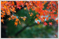 20121126_6559a_ (Redhat/) Tags: autumn fall japan temple maple kyoto redhat              sinnyodo
