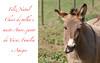 Asno, Burro ou Jumento (Jose Sousa) Tags: donkey burro asno jumento equusasinus