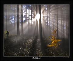 ¡Cuidadme! (Jabi Artaraz) Tags: light naturaleza luz nature cuento sony natura bosque zb haya bruma argia basoa abetos resplandor euskoflickr superaplus aplusphoto jartaraz alfa350 aldoia hojasdeoro