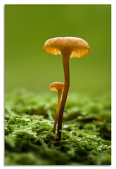 Just the two of us (Del.Higgins) Tags: macro green del mushrooms olympus dell higgins palenville schrooms oly delhiggins