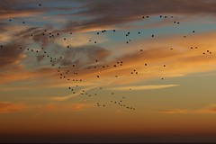 El dia acaba.. / The end of the day (Jos Rambaud) Tags: sunset birds atardecer aves tarifa straitofgibraltar estrechodegibraltar