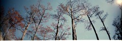 Sky View (Beach Leech) Tags: park camera trip travel camping trees light sky sun art film photoshop 35mm photography solar photo george lomo lomography view state no smith l cypress panaramic unedited negativefilm sprocketrocket