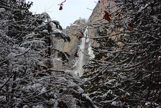Yosemite Falls through the Branches