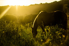 just another day (Bruno R. Rausch) Tags: sunset horse sun verde sol photography for all top  rights r bruno cavalo mato reserved gramado rausch 60d canon60d bruunorr