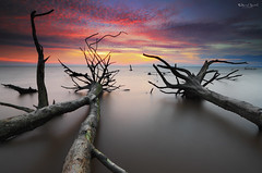 The Guardians (Fakrul J) Tags: ocean longexposure trees sunset sky cloud seascape beach nature clouds canon landscape photography landscapes amazing raw skies seascapes view dusk shoreline scenic mangrove shore fallen malaysia stick dreamy guardian fallentree selangor guardians deadtrees beautifulsunset banting morib singleshot nohuman kelanang eos500d pantaikelanang singhrayfilter leefitlers darylbensonreversegrad fakruljamil wwwfakruljamilcom imagewithcolors leeproglass3stop