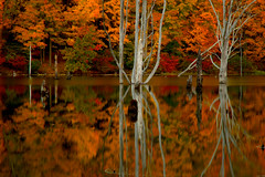 Autumn Shine - in explore (SunnyDazzled) Tags: park longexposure autumn trees history fall nature colors leaves reflections landscape mirror newjersey scenery colorful state ironworks treetrunks deadtrees regrowth longpond