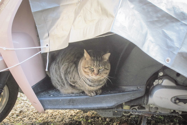 Today's Cat@2013-01-25