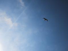 Jonathan (Ren-s) Tags: goeland gull seagull sea mer ciel bleu blue bluesky nuages clouds minimalism white blanc belgique europe ostend bird oiseau nature