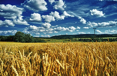 From Bohemian and Moravian Fields III. (Petr Horak) Tags: agricultural agriculture blue bohemia clouds color countryside czechrepublic europe field flora floriculture hdr green horizon landscape outdoor outside rural sky summer x100 yellow
