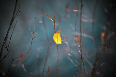 Misty leaf (Vlad S. Ionita) Tags: misty leaf blue hazy fog foggy blur blurry background bokeh soft light nature natural autumn summer leaves haze tint colorful yellow leafs branches tree outside mist up direction perspective shadow abstract exposure fuzzy