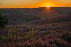 Sunrise @ De Posbank (Pieter Mooij) Tags: posbank deposbank rheden veluwezoom netherlands nederland gelderland heide hei zonsopgang sunrise veluwe guelders