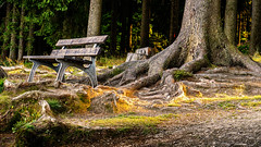 Im Wald (foto_ma) Tags: wald waldboden lowlight natur bank bume wood sonnenstrahlen