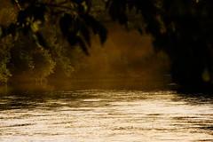 la Dordogne en soire (vieubab) Tags: ladordogne atmosphre brume calme extrieur eau fort sonyflickraward lumire nature paysage saveearth sony unlimitedphotos