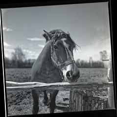 old farm (Dr. Alex O Chevtchenko) Tags: village old vintage travel kodak tmax100 processed developer d76 hasselblad 205tcc carl zeiss lens 60mm orangefilter horse 6x6 120 square mediumformat