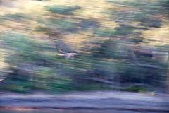 Colours! (Merrillie) Tags: colours blue colors nikon soft purple motion photography abstract movement d5500 green blur white pastel lines