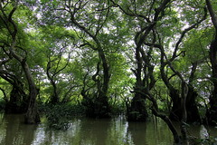 ~Swamp Forest~ (~~ASIF~~) Tags: canon60d outdoor google plant tree serene water swampforest spooky